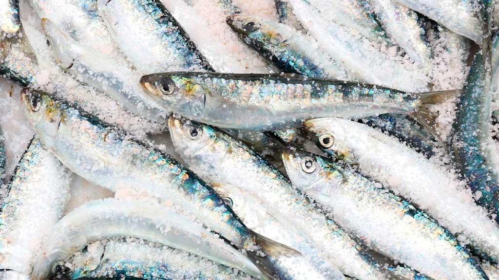 sardinas-al-horno